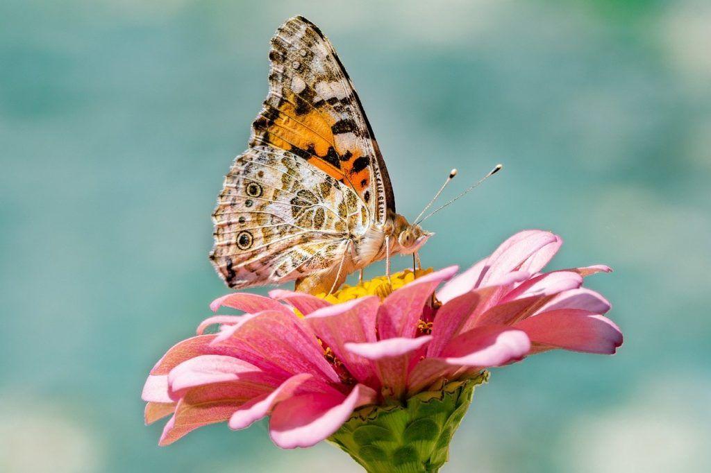 butterfly 4392735 1280